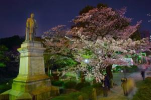 千鳥ヶ淵 銅像 桜 ライトアップ
