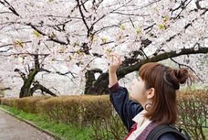 千鳥ヶ淵 桜 花見 女性