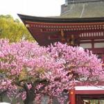 太宰府天満宮の梅2018。開花状況と見ごろ。梅が枝餅の時間は?