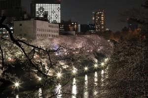 千鳥ヶ淵 桜 ライトアップ