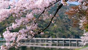嵐山 桜 渡月橋