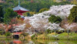 嵐山 桜 大覚寺 大沢池