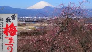 小田原梅まつり 富士山