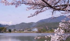 嵐山 桜 広沢池