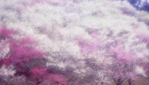 修善寺梅林 梅の木