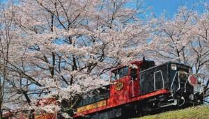 嵐山 桜 トロッコ列車