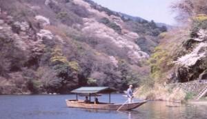 嵐山 桜 保津川下り