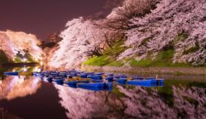 千鳥ヶ淵 桜 ライトアップ ボート