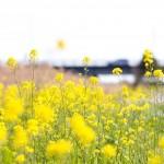 春分の日の意味と由来。決め方は?お墓参りやぼたもちの意味