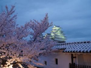 姫路城 桜 ライトアップ