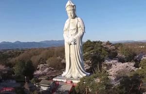 高崎白衣大観音 桜