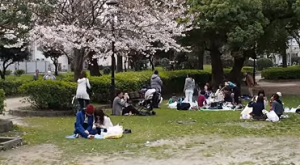 隅田公園 桜 台東区 花見