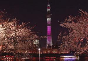 スカイツリー 桜 ライトアップ 水上バス