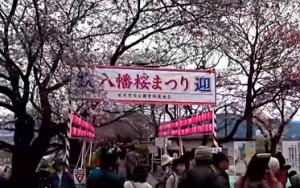 淀川河川公園背割堤地区 八幡桜まつり