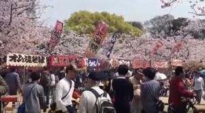 舞鶴公園 桜 屋台