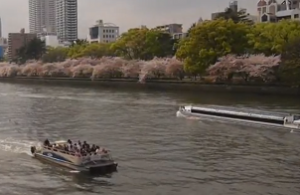 水上バス アクアライナー 桜 大阪城公園