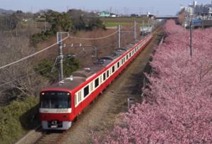 三浦海岸 桜 電車
