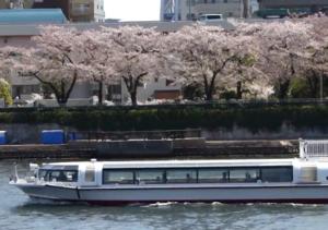 隅田公園 桜 屋形船