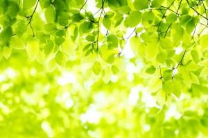 新緑 木漏れ日