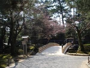 兼六園 桜 庭園