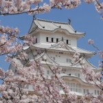 姫路城の桜2018!見頃と開花状況。ライトアップやお花見場所は?