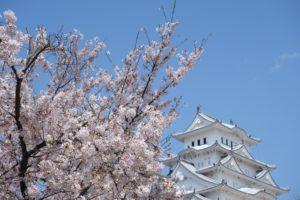 桜 姫路城
