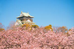 大阪城 桜 満開 青空