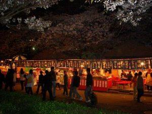 大川 屋台 桜