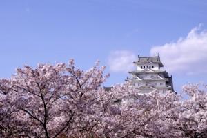 姫路城 桜 青空