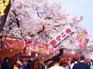 満開の桜と屋台 多くのお花見客