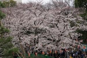 上野公園 桜まつり