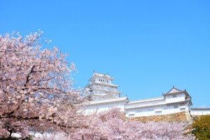 青空と姫路城と桜