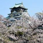 大阪城公園の桜2018の開花状況と見頃。ライトアップの時間や期間は?