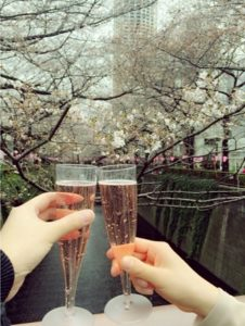 目黒川 桜 シャンパン 乾杯