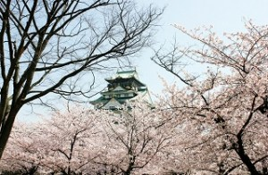 大阪城 桜 満開