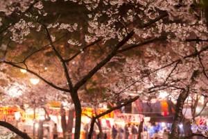 桜 夜 屋台