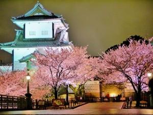 兼六園 桜と金沢城のライトアップ