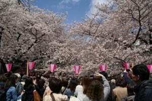 目黒 桜 花見