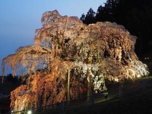 三春の滝桜 ライトアップ