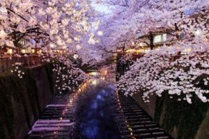 目黒川 ライトアップ 桜