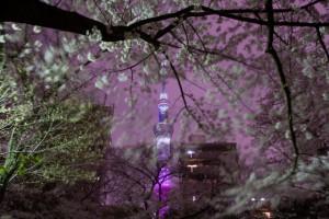 スカイツリー 桜 ライトアップ