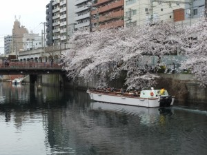 大岡川 お花見クルーズ