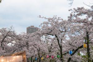 桜ノ宮公園 桜