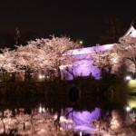 舞鶴公園の桜2017の開花状況と見頃。お花見の場所取りは?