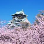 大阪城公園の桜2017の開花状況と見頃。ライトアップの時間や期間は?