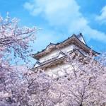 小田原城の桜2017の開花状況と見頃。お花見ランチを楽しもう!
