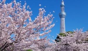 隅田公園 桜 スカイツリー