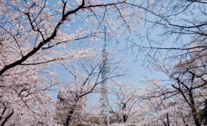 スカイツリー 桜