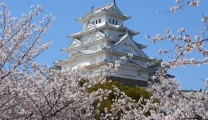 姫路城 桜 コラボレーション