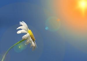 花 太陽 青空